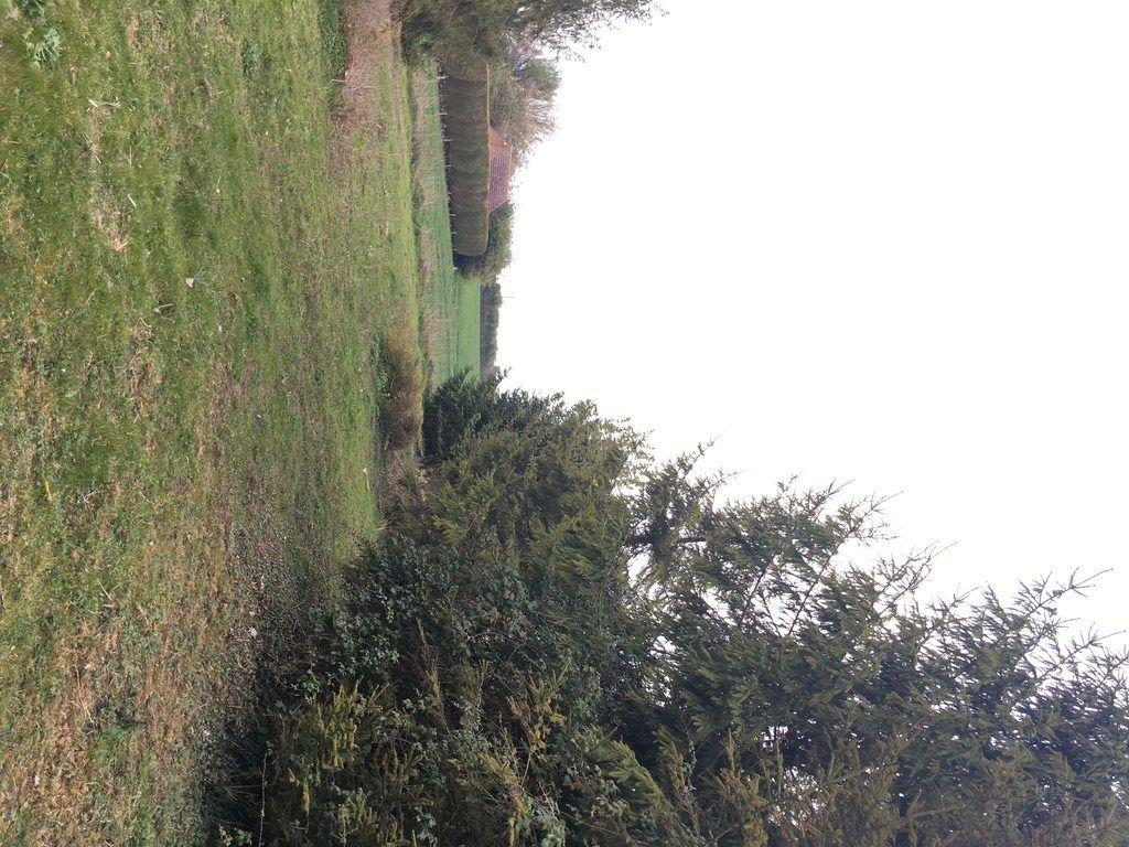 Large tree in open field