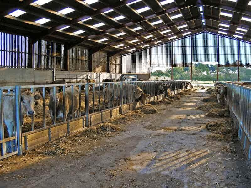 inside a barn under construction
